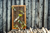 Jasna`s Kreativ-Werkstatt: Gluebirnern als Blumenvasen